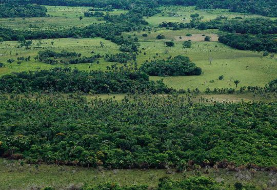 ganadería verde